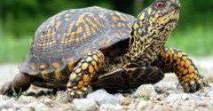 turtle momentum